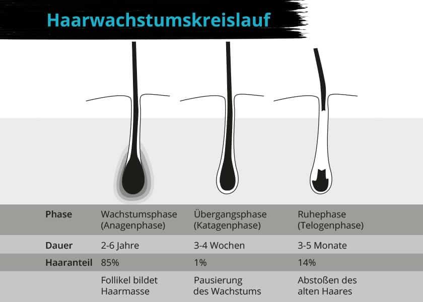 Haarwachstumskreislauf in drei Phasen